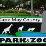 It was such a fun trip at the Cape May Zoo!